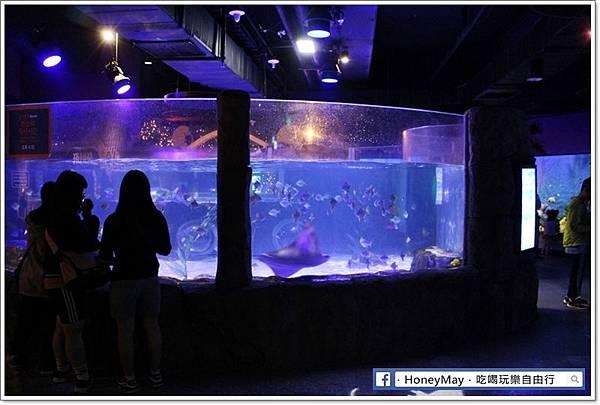 IMG_8203釜山水族館sea life.JPG