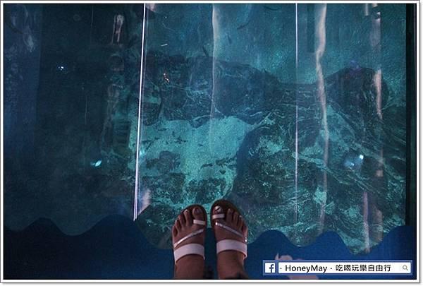 IMG_8228釜山水族館sea life.JPG