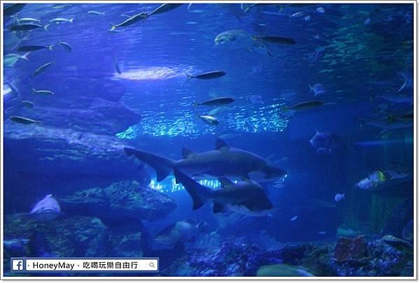 IMG_8233釜山水族館sea life.JPG
