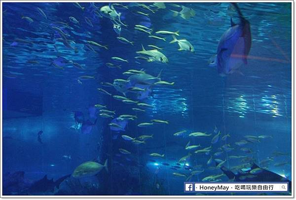 IMG_8237釜山水族館sea life.JPG