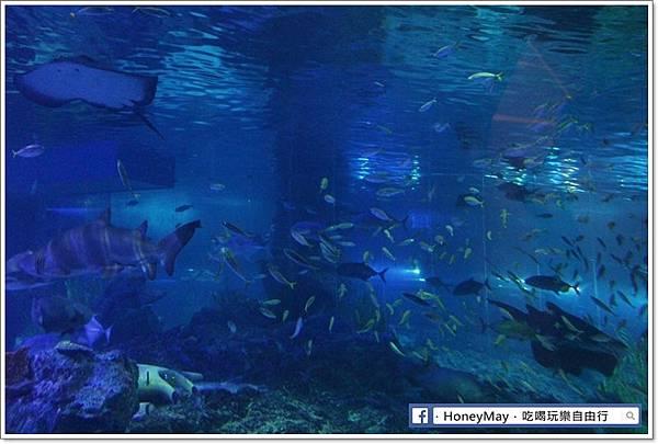 IMG_8240釜山水族館sea life.JPG