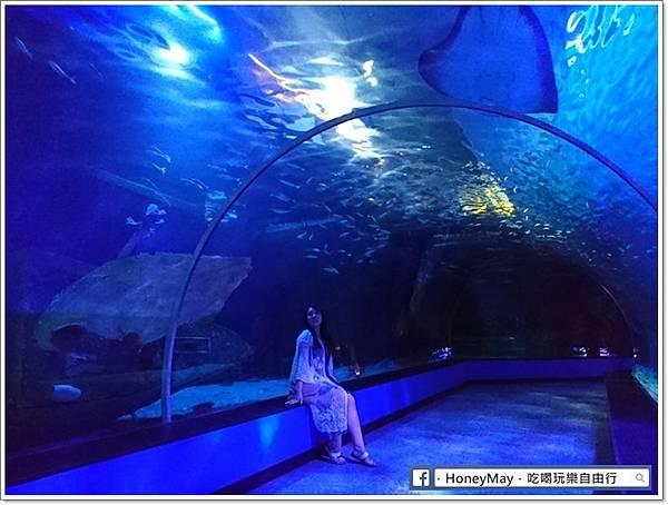 釜山水族館sea life