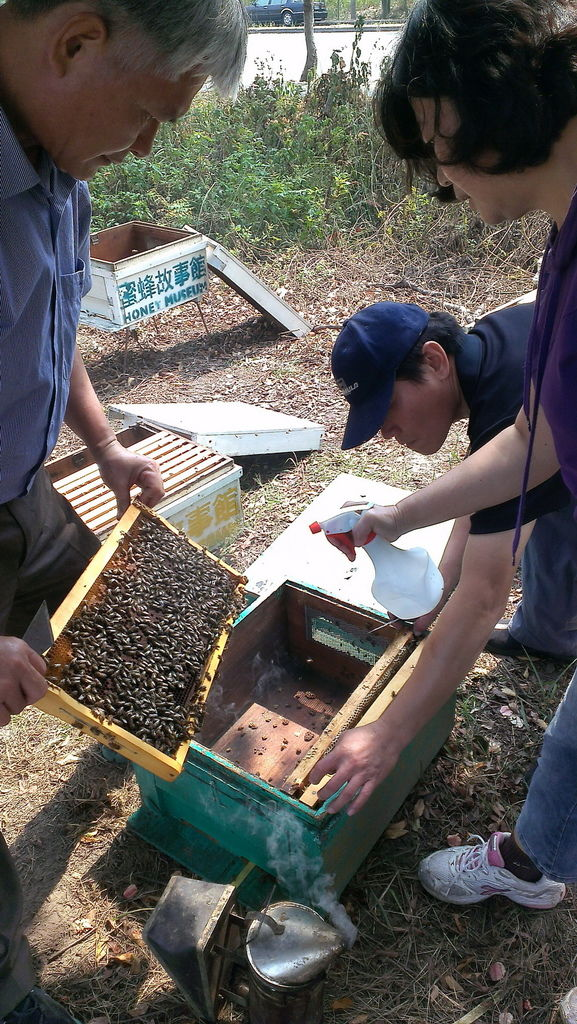 正在噴水消除蜜蜂身上的氣味