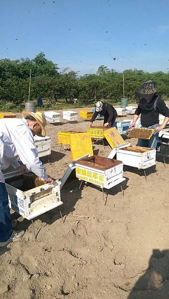 和小蜜蜂一起工作