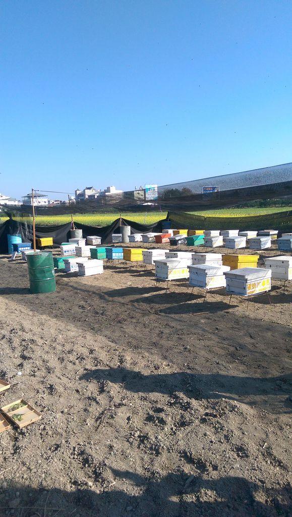 搭好棚子讓小蜜蜂不會被太陽直曬到
