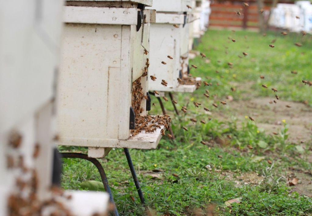 小蜜蜂也感受到颱風逼近