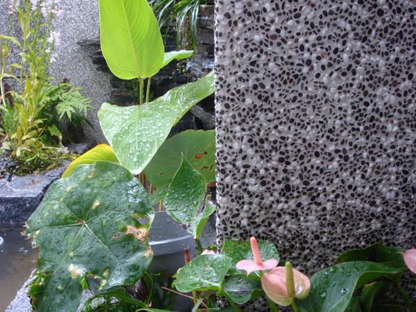 抿石子 抿洗石 黑膽扁加特白