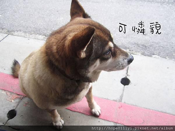 裝可憐狗勾