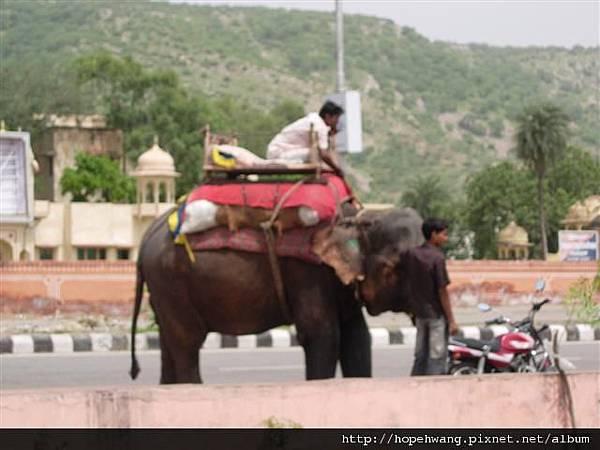 印度 477717水之宮殿 (小型)