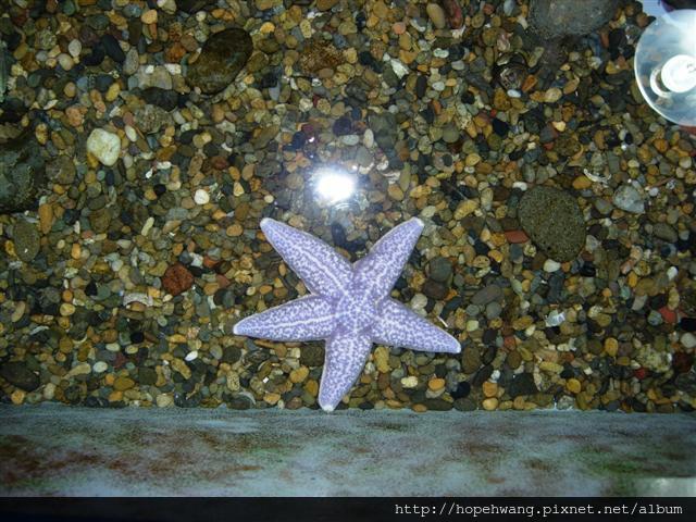 080423-3尼克斯海洋公園pay (61) (小型).jpg