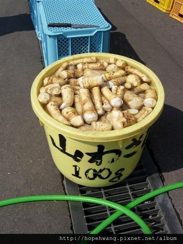 080425-4京極湧水公園pay (8) (小型).jpg