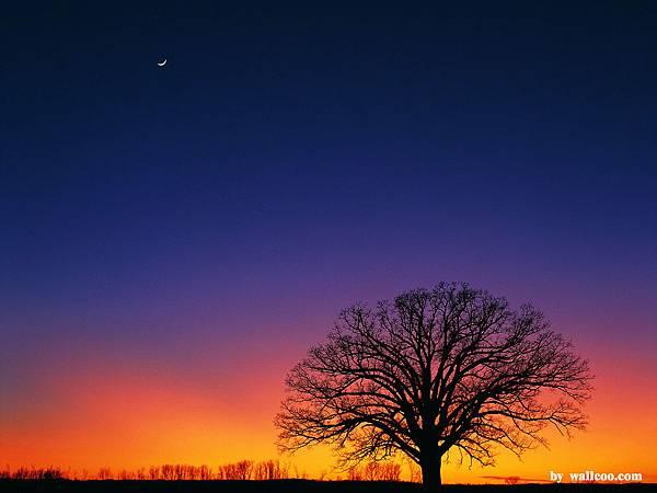 [wall001_com]_dust_sunset_313%20KB_1
