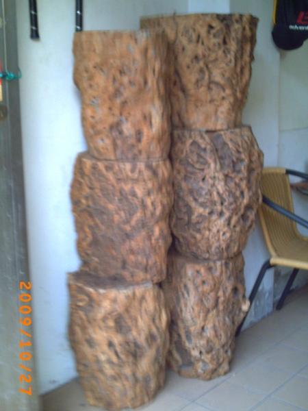 棗樹樹瘤1.jpg