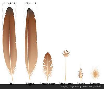 【認識羽絨深入教學】關於羽毛的定義 & 羽毛絨的分類