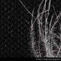 【認識羽絨深入教學】關於羽絨深度介紹 -羽絨(down)、小羽絲、纖羽(down fiber) 2