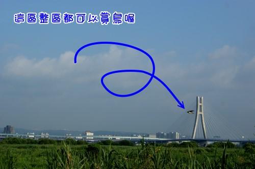 DSC08152.jpg
