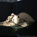 DREAM&CHALLENGE-8 女神像殘骸