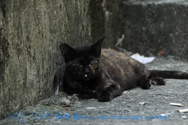 catpart306.jpg