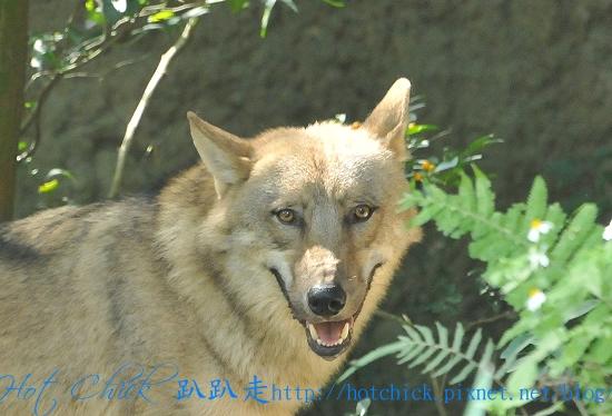 1031wolf01.jpg