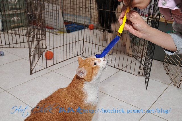 cat05.jpg