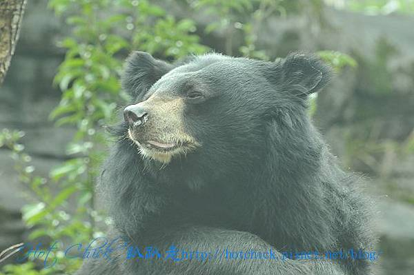 bear07.jpg