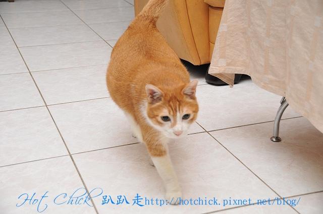 cat06.jpg
