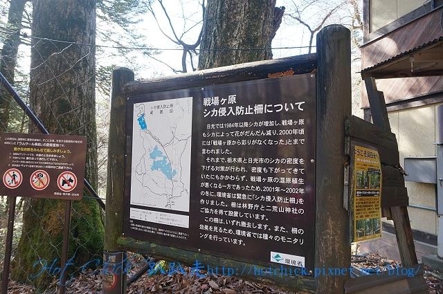 walk03.jpg