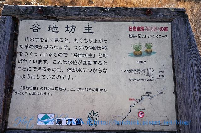 walk38.jpg