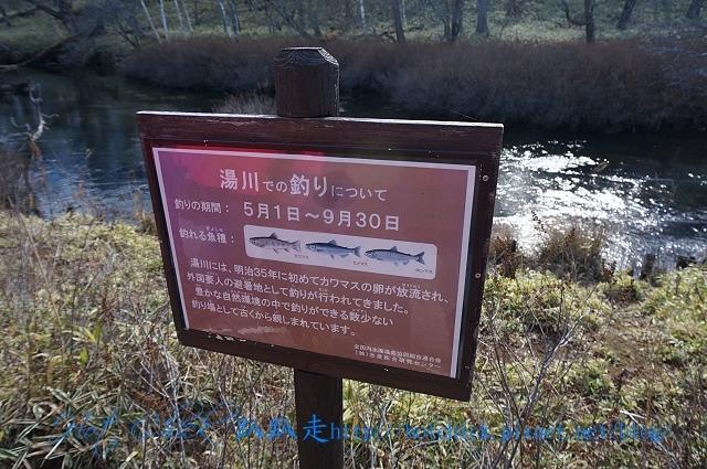 walk45.jpg