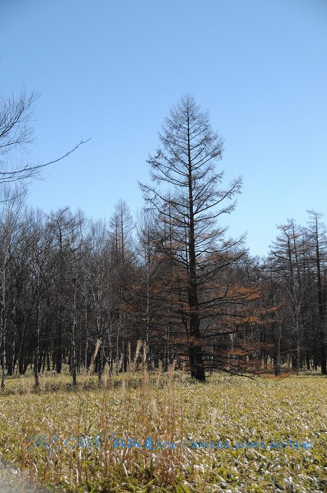 tree25.jpg