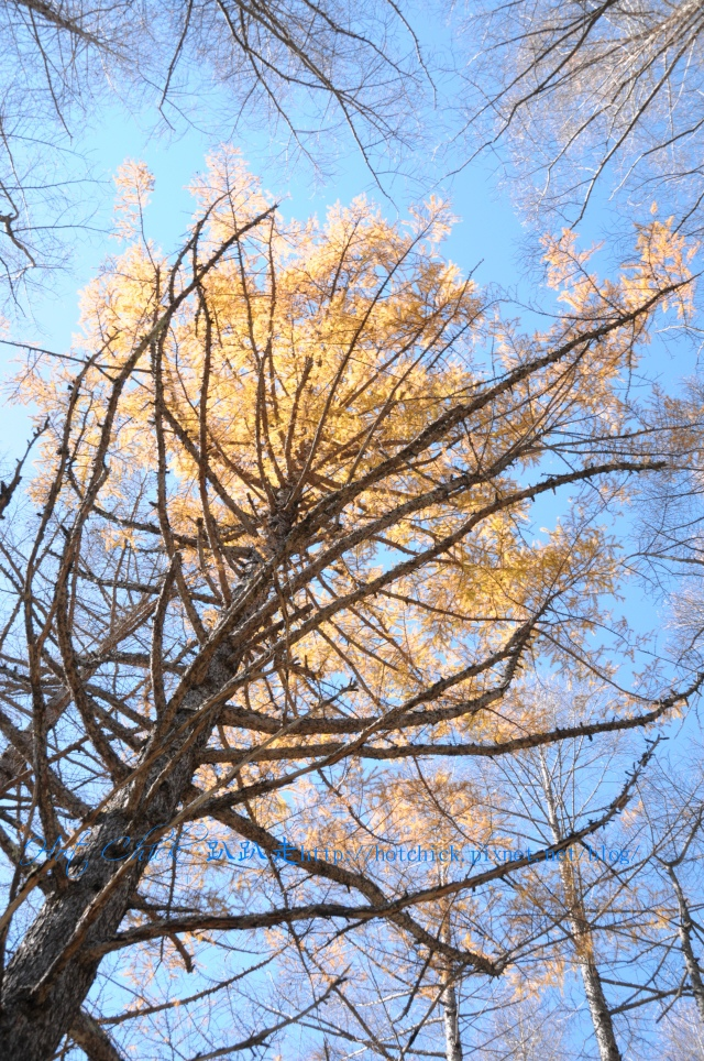 tree31.jpg