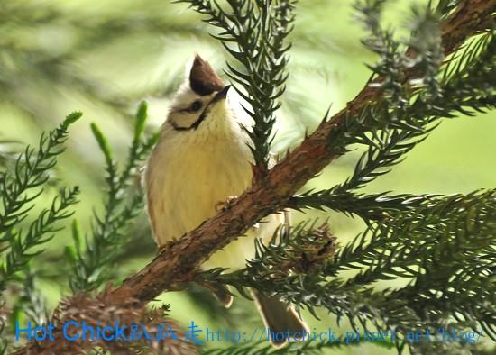 bird05.jpg