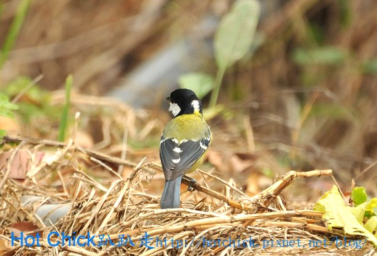 bird06.jpg