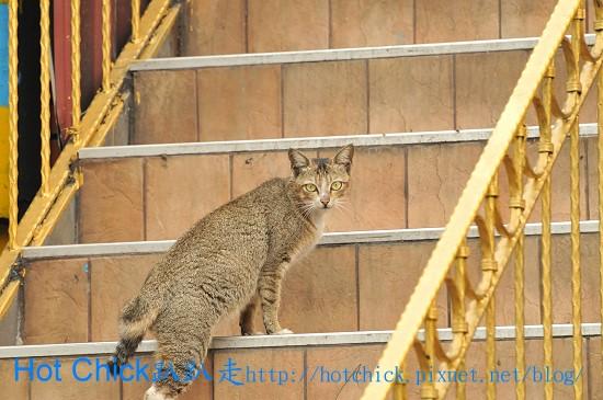cat08.jpg