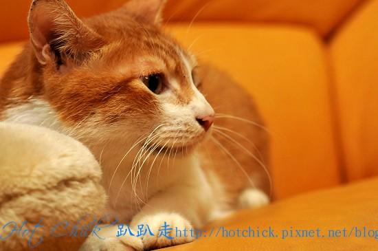 貓ω寫真01.jpg