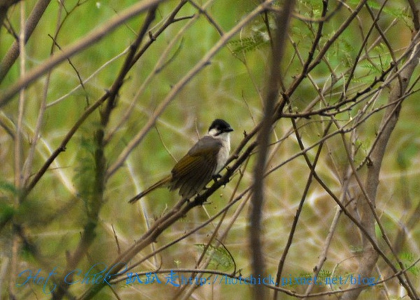 bird02.jpg