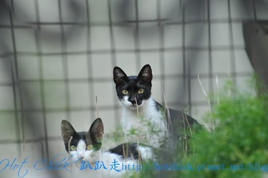 cat03.jpg