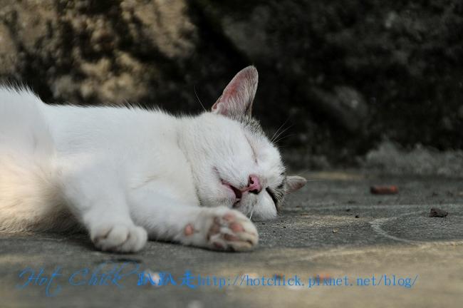 catpart101.jpg