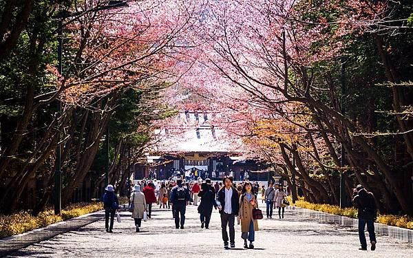 札幌賞櫻2.jpg