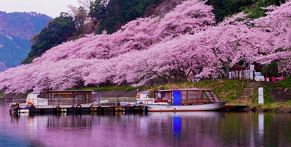 京都自駕遊|滋賀一日遊景點推介|海津大崎.png