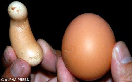 banana-shaped-egg-2.jpg