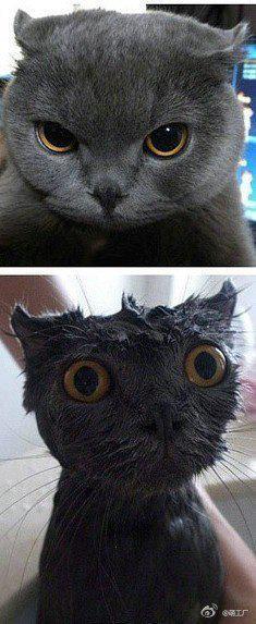 洗澡前洗澡後