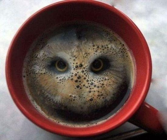 coffee-owl