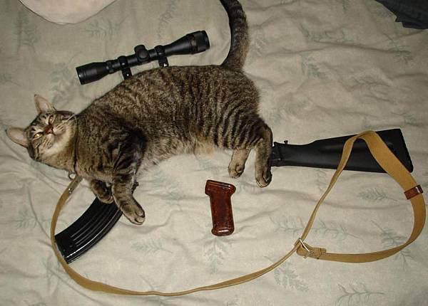 貓咪狙擊槍