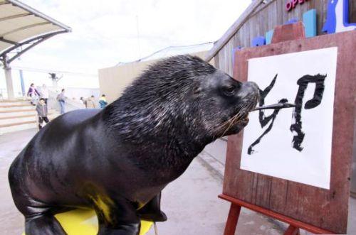sea-lion-calligraphy-2