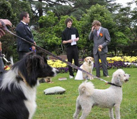 man-dog-wedding-2.jpg