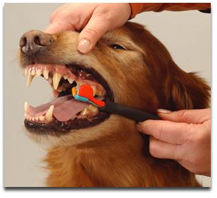 dog-brush-teeth.jpg