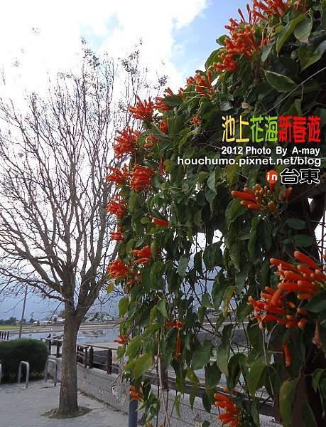 BC189 池上花海新春遊05