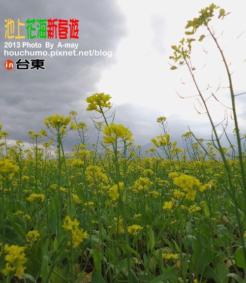 BC189 池上花海新春遊17