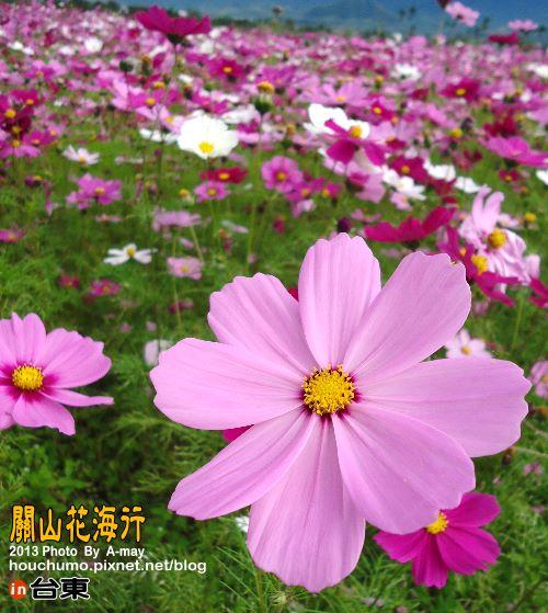 BC191 台東關山花海01